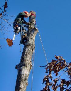 Hiring climbers st. Louis